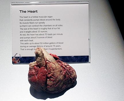 Students Tour the Human Body