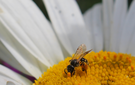 Saleem wins photo contest at Hathaway cottage